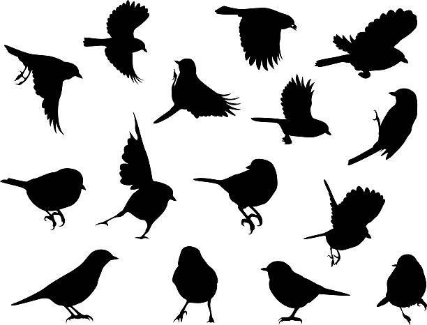silhouettes – birds - birds stock illustrations