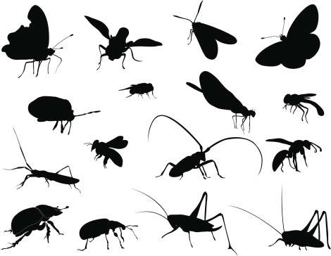 Silhouettes - Insects