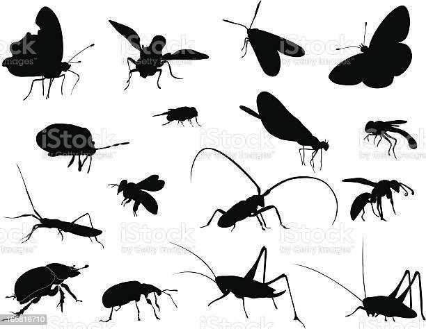 Silhouettes insects vector id165816710?b=1&k=6&m=165816710&s=612x612&h=1newiietbh717yzeq2f2l hiuqo4a 4jsmtxhbpuf a=