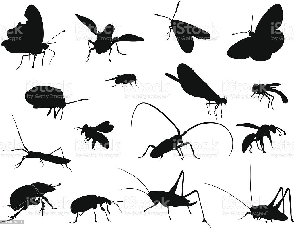 Silhouettes - Insects vector art illustration