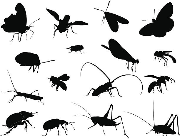 silhouettes - insects - bugs stock illustrations, clip art, cartoons, & icons