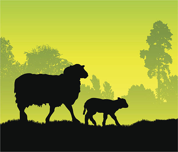 Silhouettes of a sheep and lamb walking through a field A beautiful image of sheep in a field flock of sheep stock illustrations
