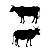 Silhouettes of a standing cow. Side view. Vector illustration isolated on white background