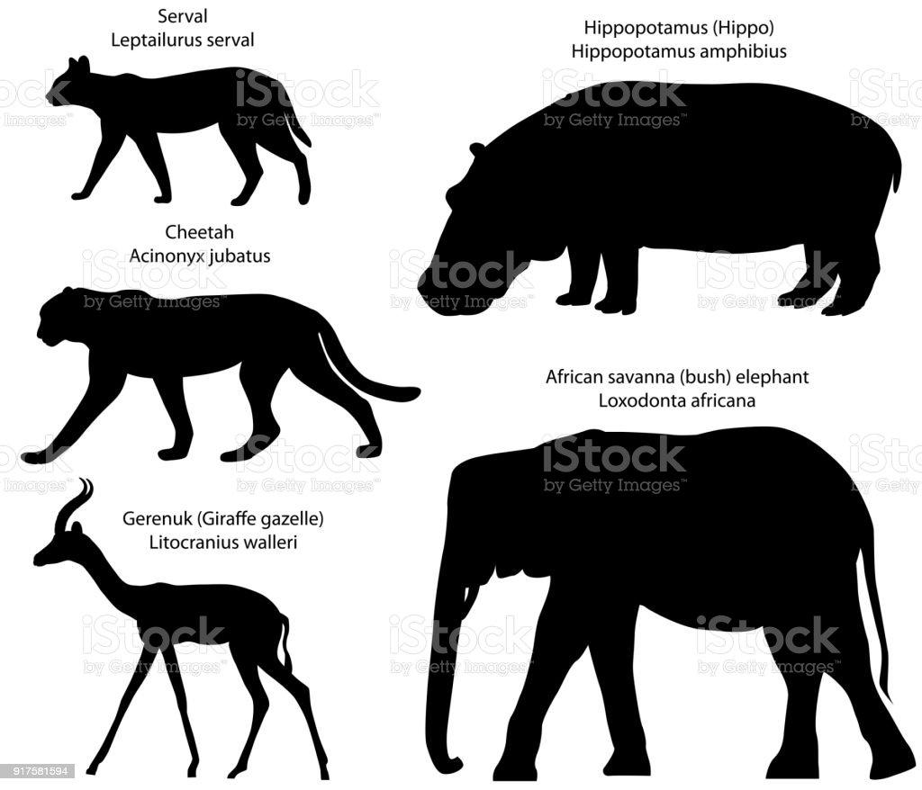 アフリカの動物のシルエット - アフリカのベクターアート素材や画像を