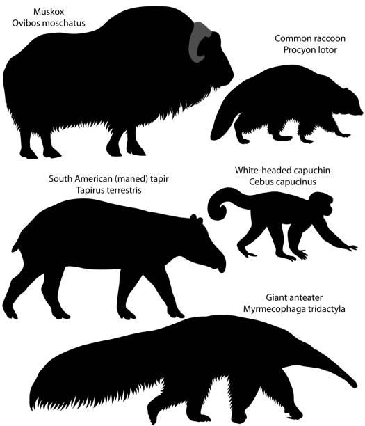silhouetten von tieren amerikas - ameisenbär stock-grafiken, -clipart, -cartoons und -symbole