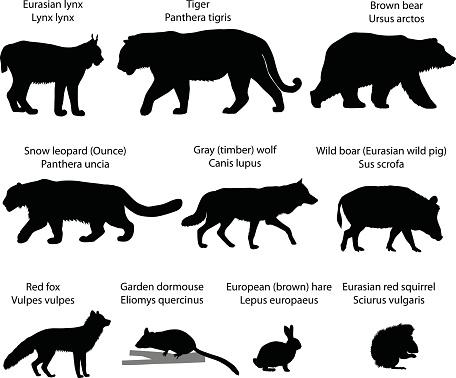 Silhouettes of animals of Eurasia