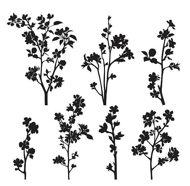 Silhouettes of apple blossom branches on white background Collection of spring  blossomed branches.  apple blossom stock illustrations