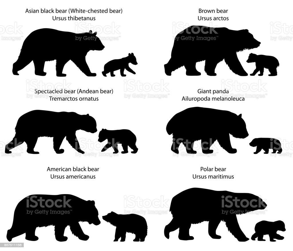 Silhouettes d'ours et oursons silhouettes dours et oursons vecteurs libres de droits et plus d'images vectorielles de andes boliviennes libre de droits