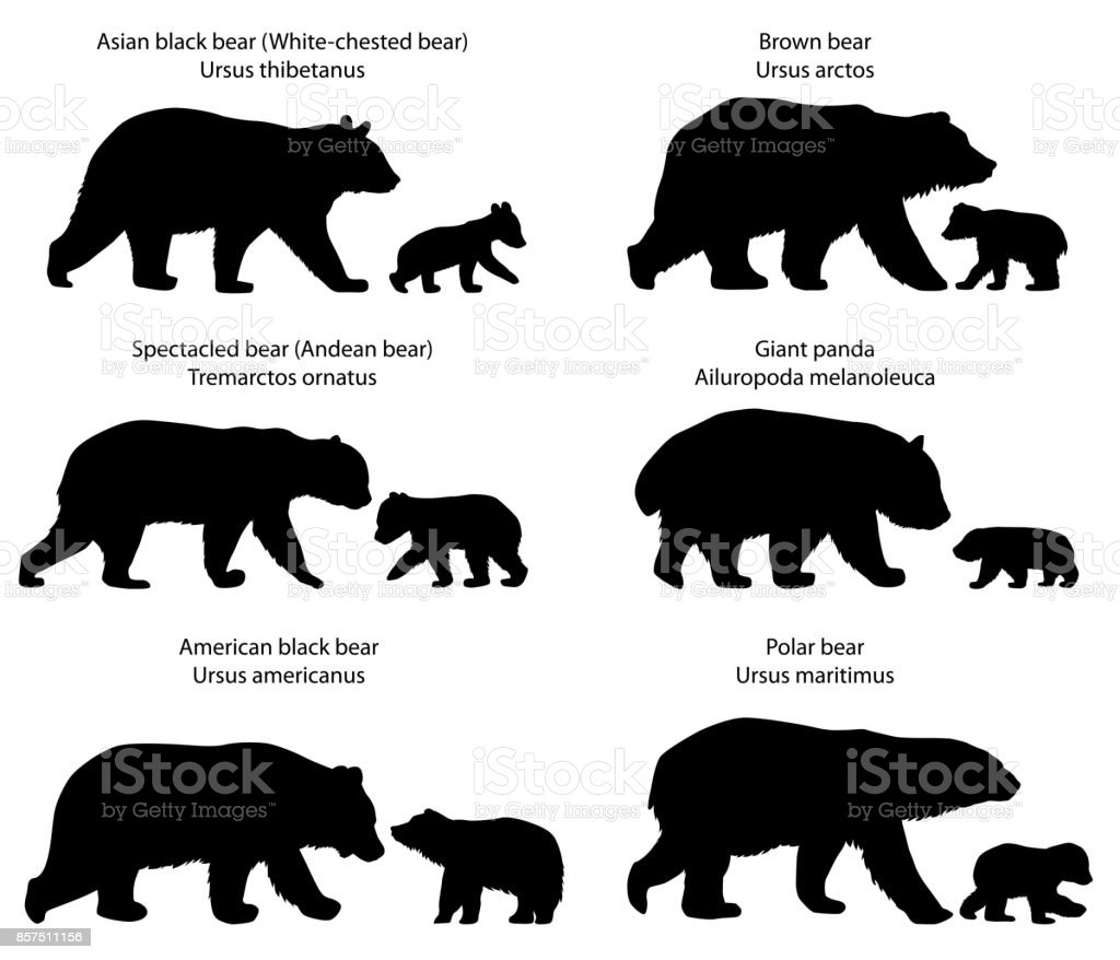 Silhouettes d'ours et oursons - Illustration vectorielle