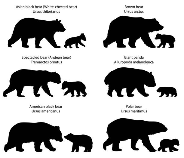 Silhouettes of bears and bear-cubs vector art illustration