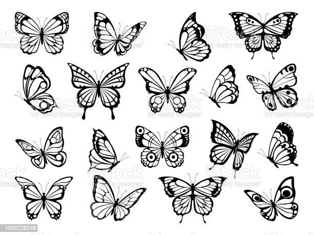 Silhouettes of butterflies black pictures of funny butterflies vector id1055226248?b=1&k=6&m=1055226248&s=612x612&h=lzk auinwnwyuyzt4yay6l4mg15fw3oaylgi mbluhe=