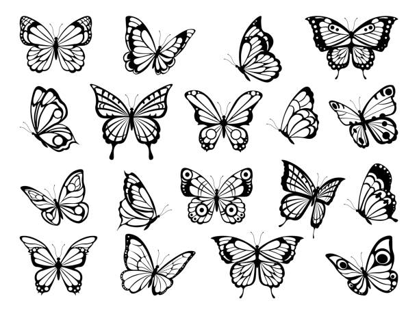 silhouettes of butterflies. black pictures of funny butterflies - butterfly stock illustrations