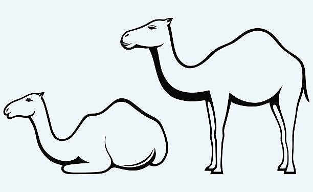Best Silhouette Of A How To Draw A Camel Illustrations, Royalty-Free