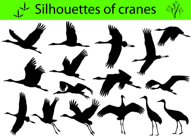 silhouettes of cranes - crane bird stock illustrations