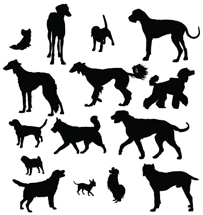 Silhouettes of different breeds of dogs over a white surface