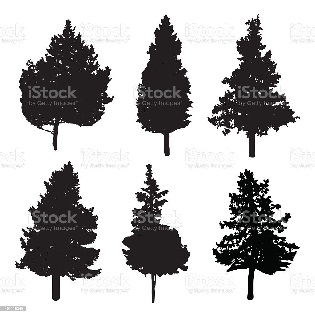 Silhouettes of different kind of fir and pine trees vector art illustration