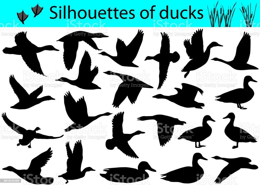 Silhouettes of ducks vector art illustration