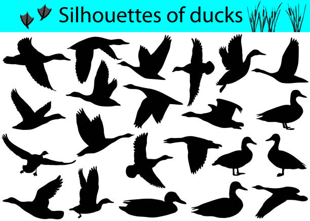 Silhouettes of ducks Collection of silhouettes of ducks duck bird stock illustrations