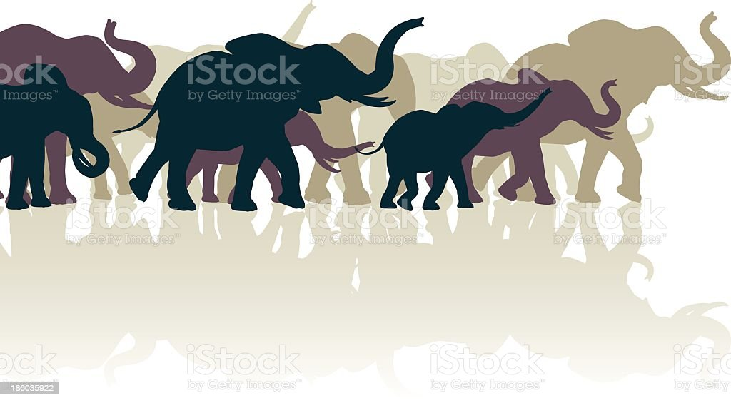Silhouettes of elephants against white background vector art illustration