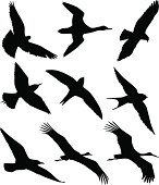 Silhouettes of flying birds against white background