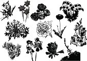 Twelve black silhouettes of flowers and plants on a white background