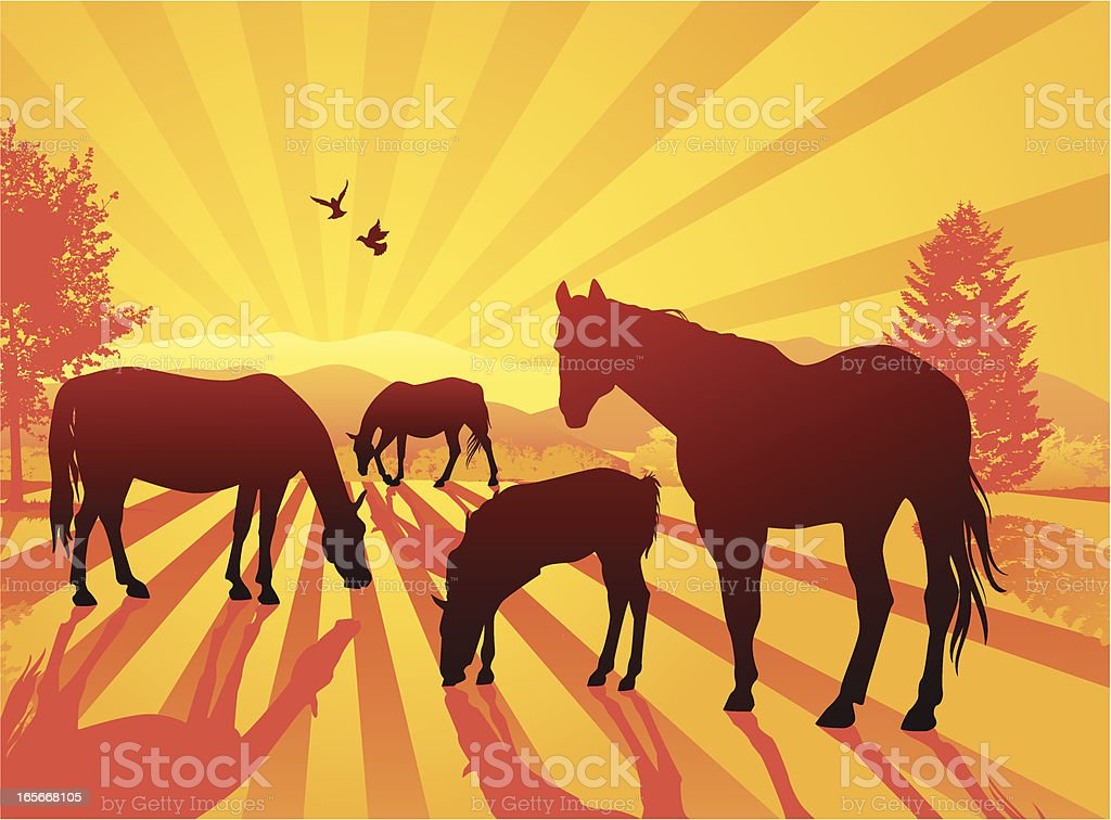 Silhouettes of Horses in Landscape at Sunset vector art illustration