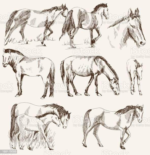 Silhouettes of horses vector id155175033?b=1&k=6&m=155175033&s=612x612&h=hz4nvui 1zhhzbtoqwecdgasoh hfgbbqvvhngfsqho=