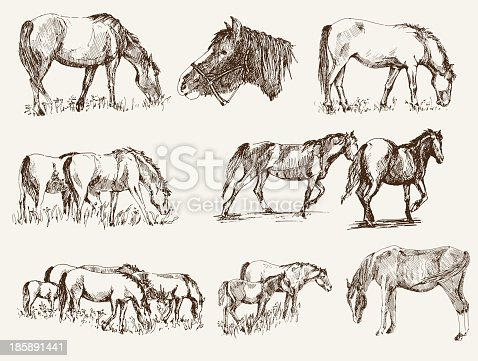 silhouettes of horses. set of vector sketches