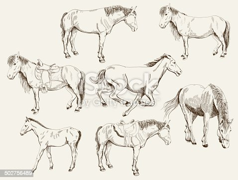 silhouettes of horses. vector set of seven sketches