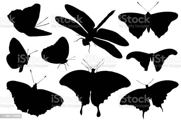 Silhouettes of insects isolated on white background vector vector id1165725666?b=1&k=6&m=1165725666&s=612x612&h=o ibre1eslfgwk1g edgo9ulnb97fp3e4kwwbm01y i=