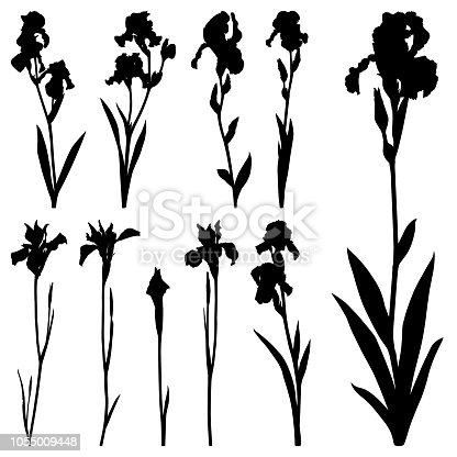 Set of iris flowers. Detailed images isolated black on white background. Vector design elements.