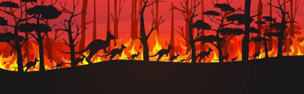 bildbanksillustrationer, clip art samt tecknat material och ikoner med silhuetter av känguruer som löper från skogsbränder i australien djur dör i wildfire bushfire brinnande träd naturkatastrof koncept intensiva orange flammor horisontella - skog brand