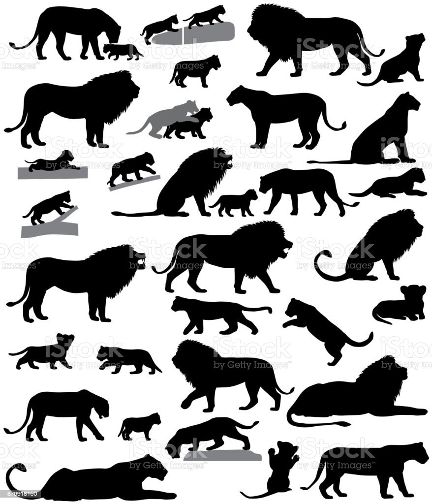 Silhouettes of lions and lion cubs vector art illustration