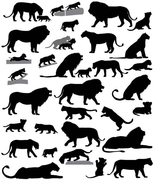 Silhouettes of lions and lion cubs Collection of silhouettes of lions and lion cubs lion cub stock illustrations