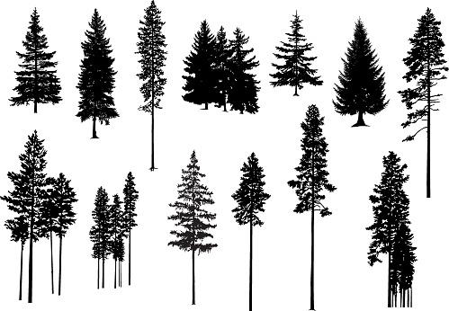 Set. Silhouettes of pine trees.