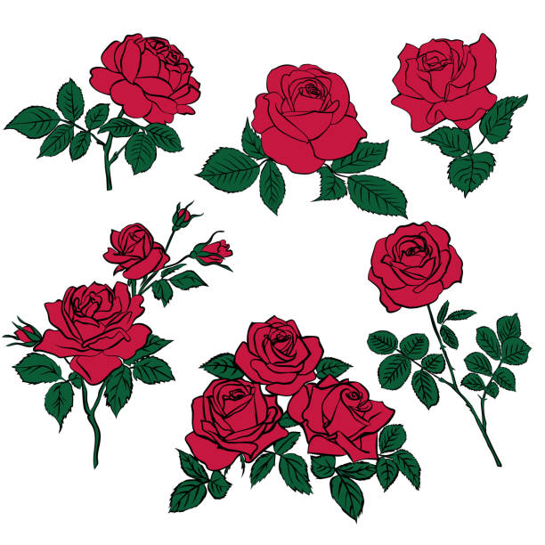 Silhouettes of red roses and green leaves silhouettes of rerd roses and green leaves isolated on white background. Vector illustration. flowers tattoos stock illustrations