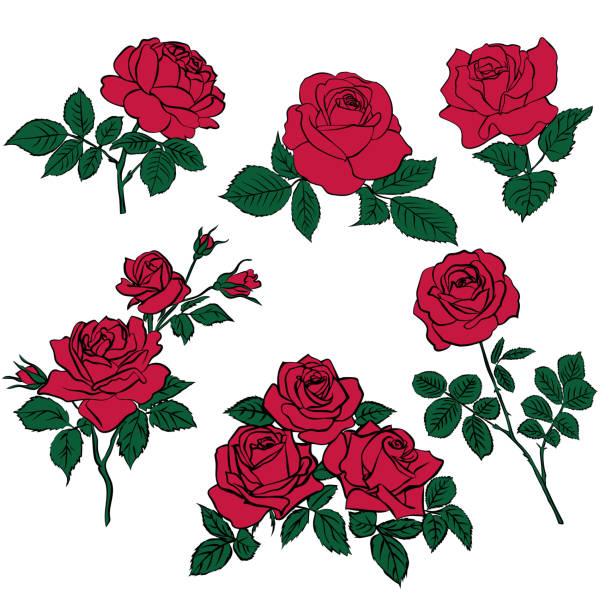 silhouetten von roten rosen und grünen blättern - rose stock-grafiken, -clipart, -cartoons und -symbole
