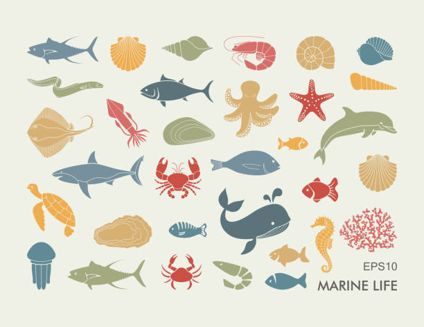 Silhouettes of sea inhabitants. Vector flat illustration Silhouettes of sea inhabitants. Vector flat illustration marine life stock illustrations