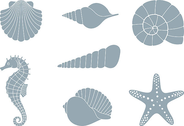 silhouettes of sea inhabitants - seashell stock illustrations, clip art, cartoons, & icons