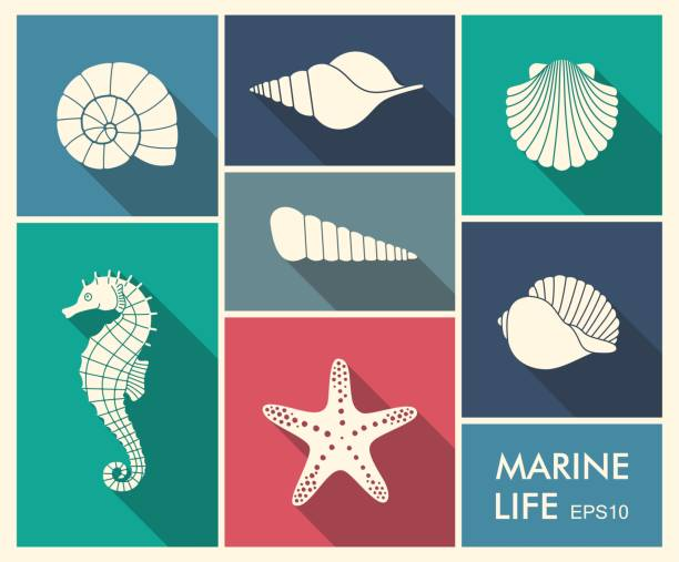 stockillustraties, clipart, cartoons en iconen met silhouetten van zee inwoners - zeeschelp