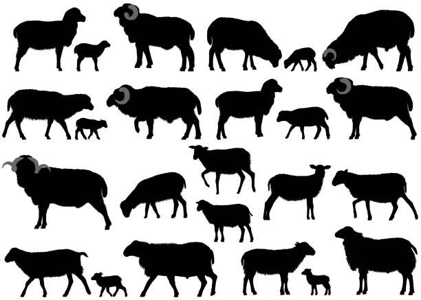 stockillustraties, clipart, cartoons en iconen met silhouetten van sheeps - schaap