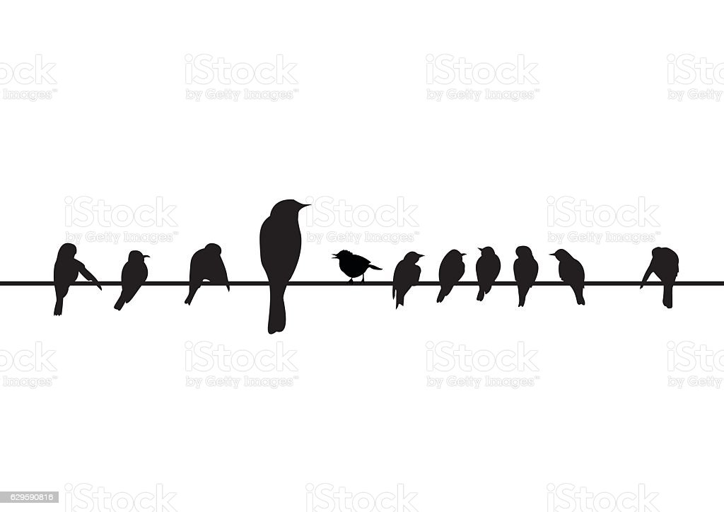 Silhouettes Of The Birds Sitting On Electric Wire stock ...