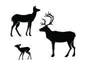 Silhouettes of the deer on white background. , doe, fawn.