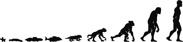 Silhouettes of the evolution of humankind vector art illustration