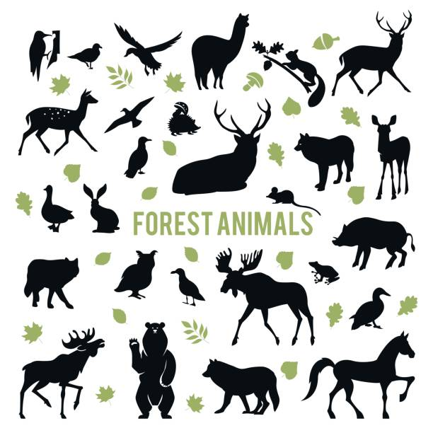 Silhouettes of the forest animals. Collection of silhouettes of forest animals isolated on white background. elk stock illustrations