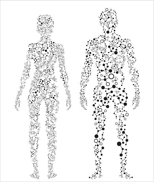 2 silhouettes of the human body made up of dots Human body, molecular concept. female likeness stock illustrations
