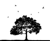 istock Silhouettes of trees and flying birds 1254194596