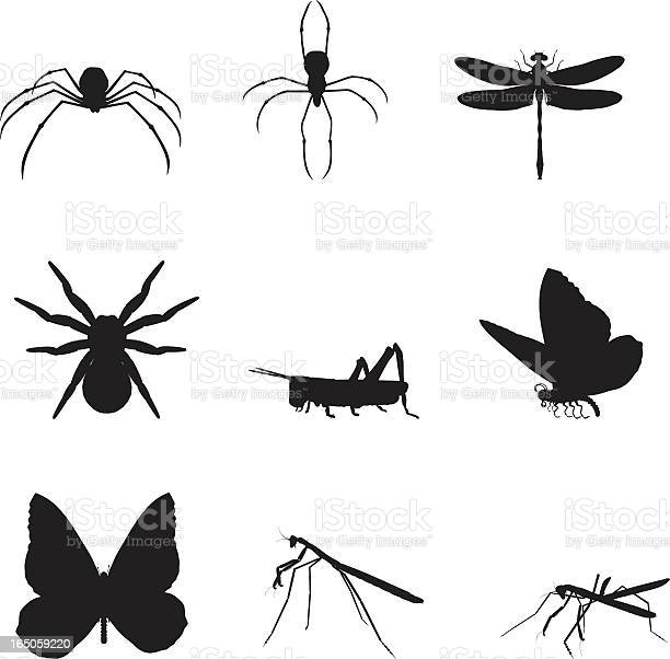 Silhouettes of various insects on a white background vector id165059220?b=1&k=6&m=165059220&s=612x612&h=pyb6zgno7cp5wyqvhru334fmmwo58hobdsemczr6u2a=