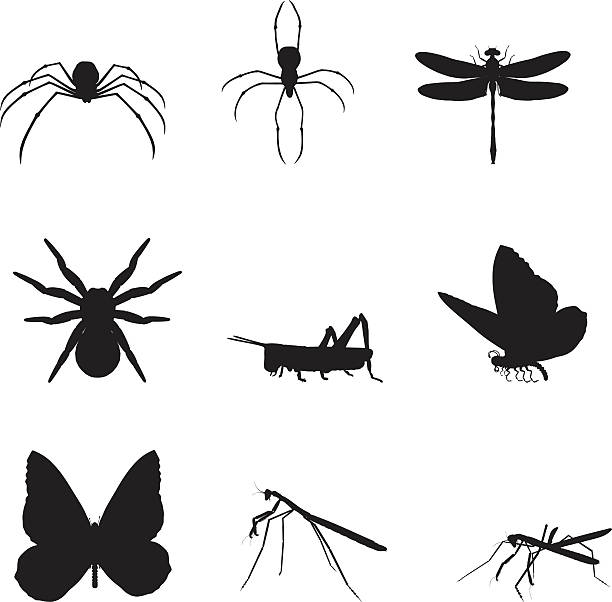 silhouettes of various insects on a white background  - tarantula stock illustrations