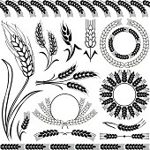 Silhouettes of wheat, different shapes